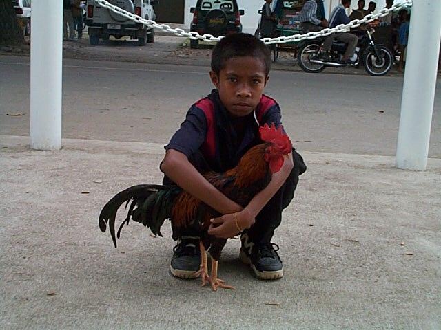 Timor_2
